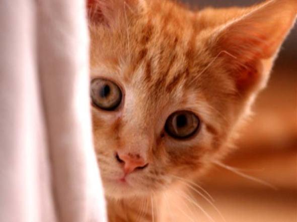 como-sabes-que-tu-gato-esta-envejeciendobolabril28